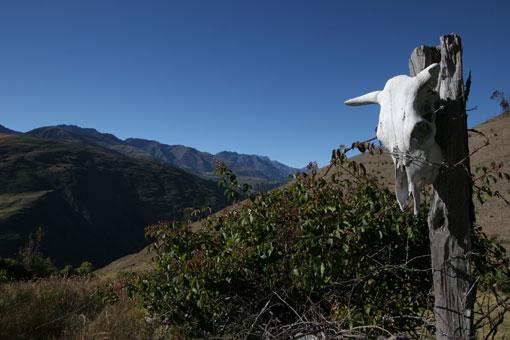 Skull, Venezuelan Andes