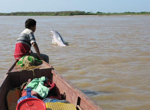 Pink river dolphin, Los Llanos, Venezuela